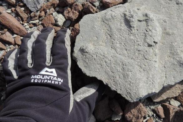 Kétszázmillió éves ősgyík-lábnyomot találtak az Antarktiszon