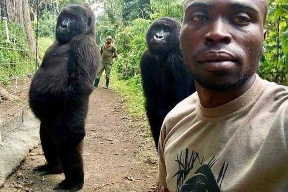 Mobiltelefont látva pózoltak a gorillák