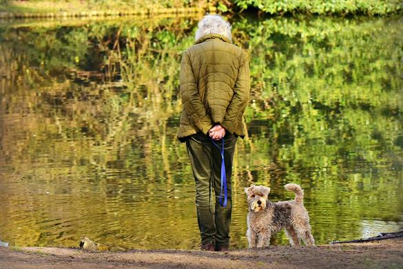 A kutyasétáltatás növelheti a csonttörés kockázatát az idős embereknél
