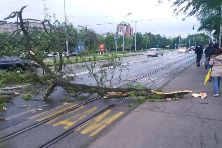 Több helyen letört ágak, kidőlt fák nehezítik a közlekedést