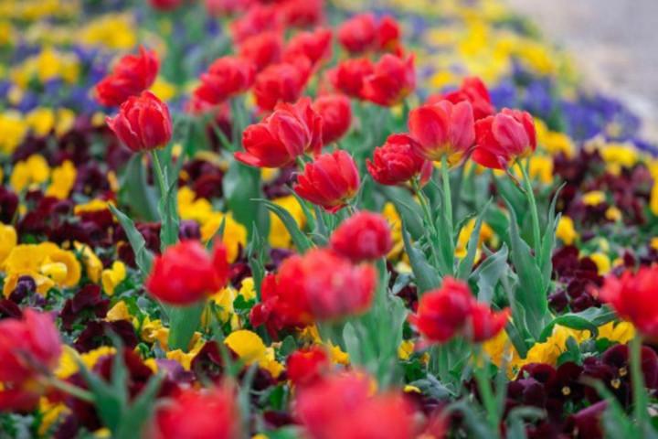 Újra virágba borul az ország