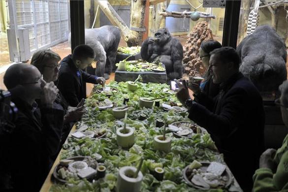 Gorillákkal reggeliztek állatvédők a budapesti állatkertben