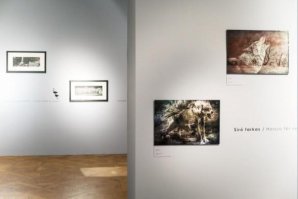 Fotósorozatokban tündöklő költői képek