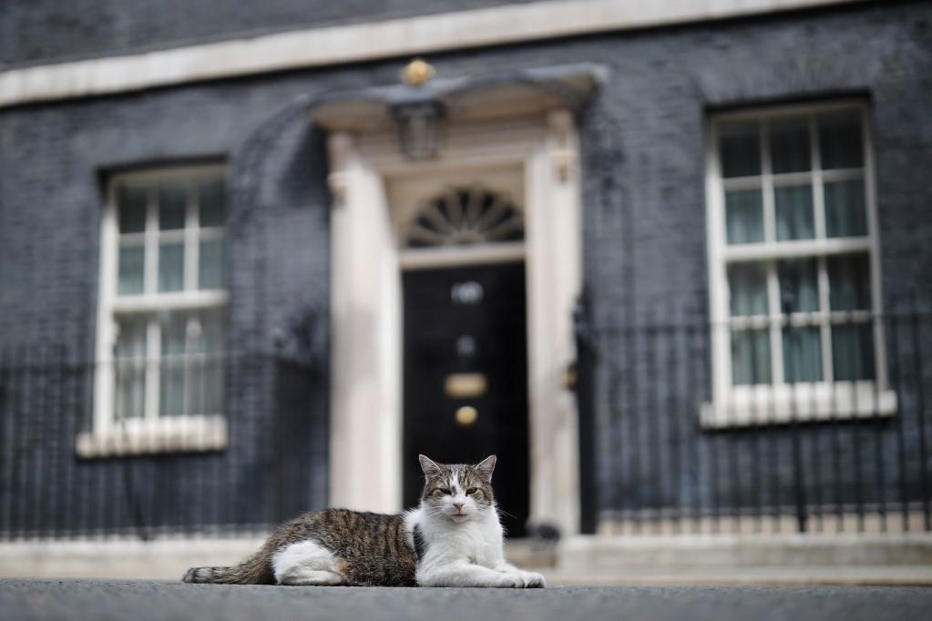 Larry, a brit miniszterelnöki hivatal főegerésze