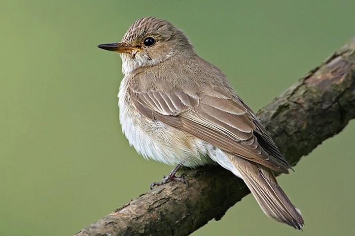 A madárdal is divatot követ, akárcsak az emberi zene