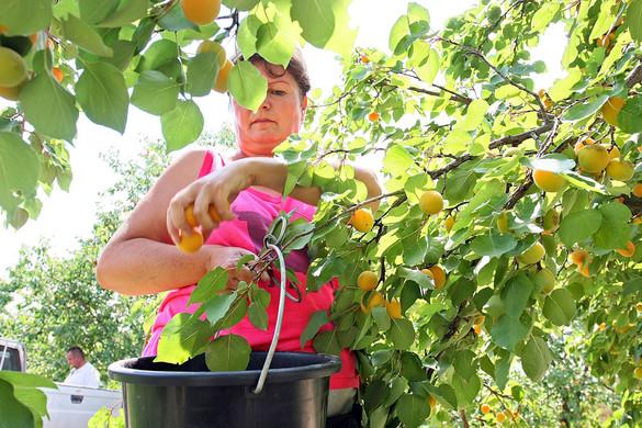 Tovább növekszik a foglalkoztatás a nyári időszakban