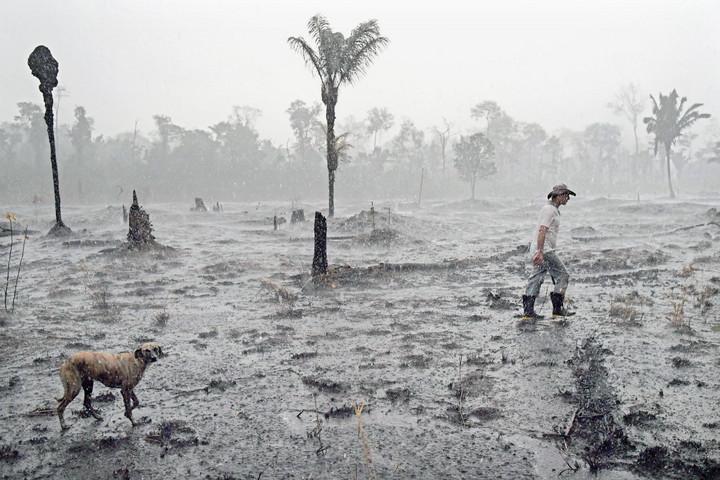 Félő, hogy szavannává válnak az esőerdők