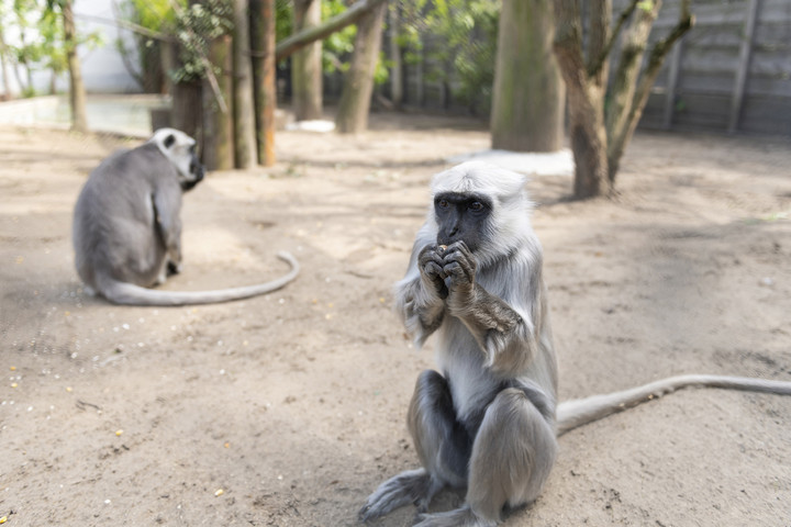 Hulmánnal gyarapadott a Nyíregyházi Állatpark