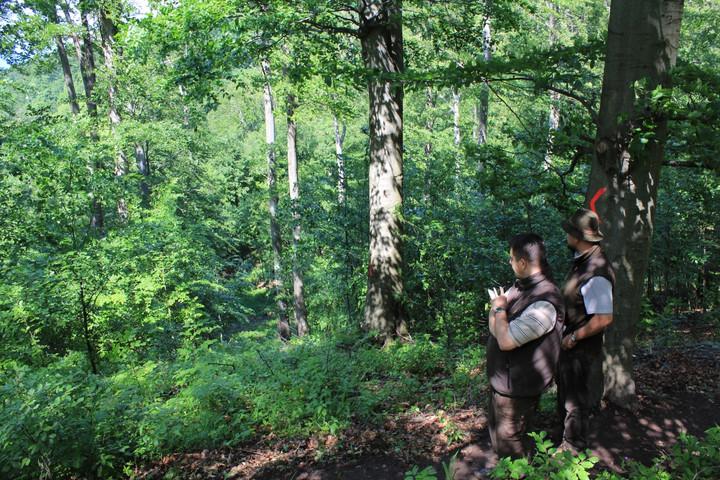 Felméri az idősödő fákat a Budapesti Erdészet