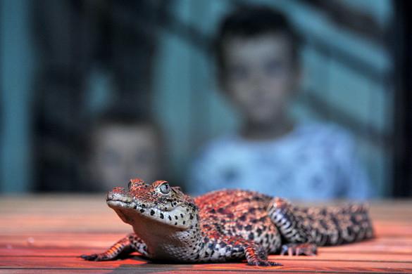 Ritka krokodilok érkeztek a budapesti állatkertbe