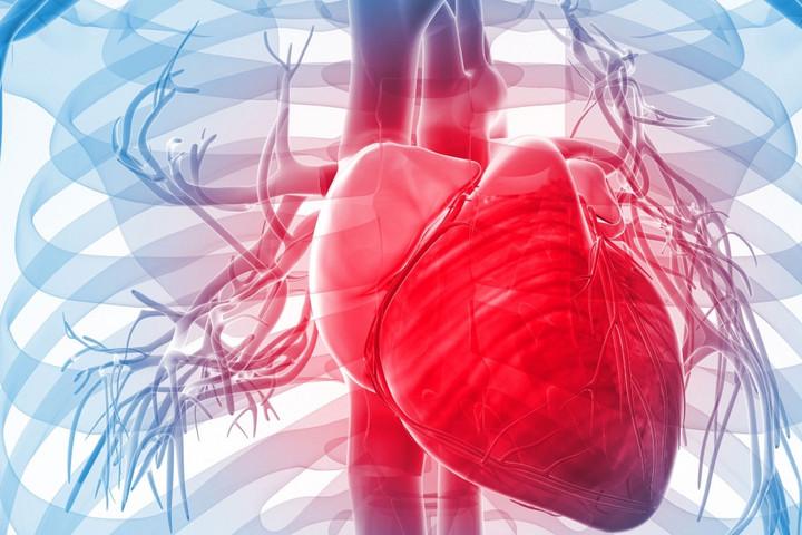 Mégsem a testtömegindex mutatja a szív- és érrendszeri problémák kockázatát