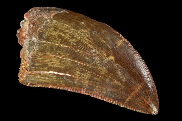 Különleges dinoszaurusz-fosszíliát találtak Thaiföldön