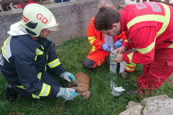 Megmentették egy macska életét a gödöllői tűzoltók