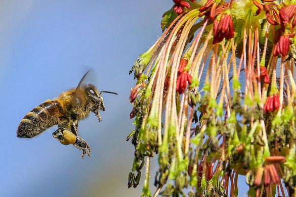 Összegyűltek a hazai aláírások a méhek megmentését célzó európai kezdeményezéshez