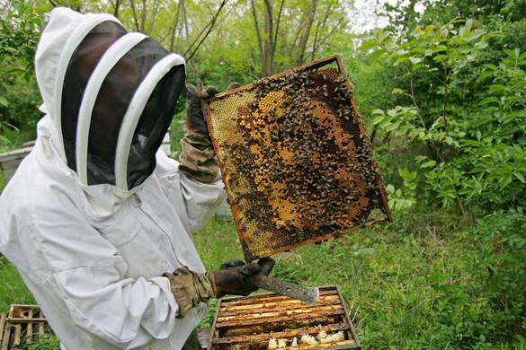 Válsághelyzetben az európai méhészet