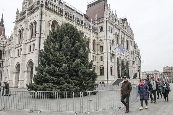 Veszprémből érkezett az ország karácsonyfája