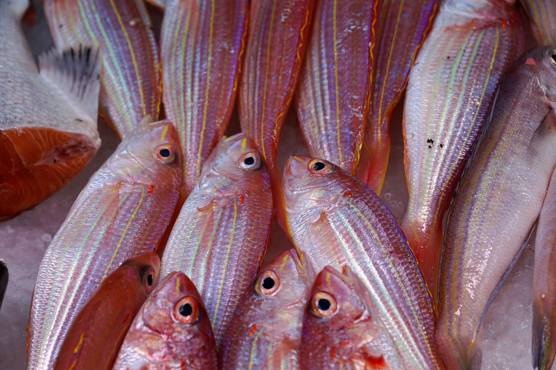 A halas ételek fogyasztása egész évben fontos lenne