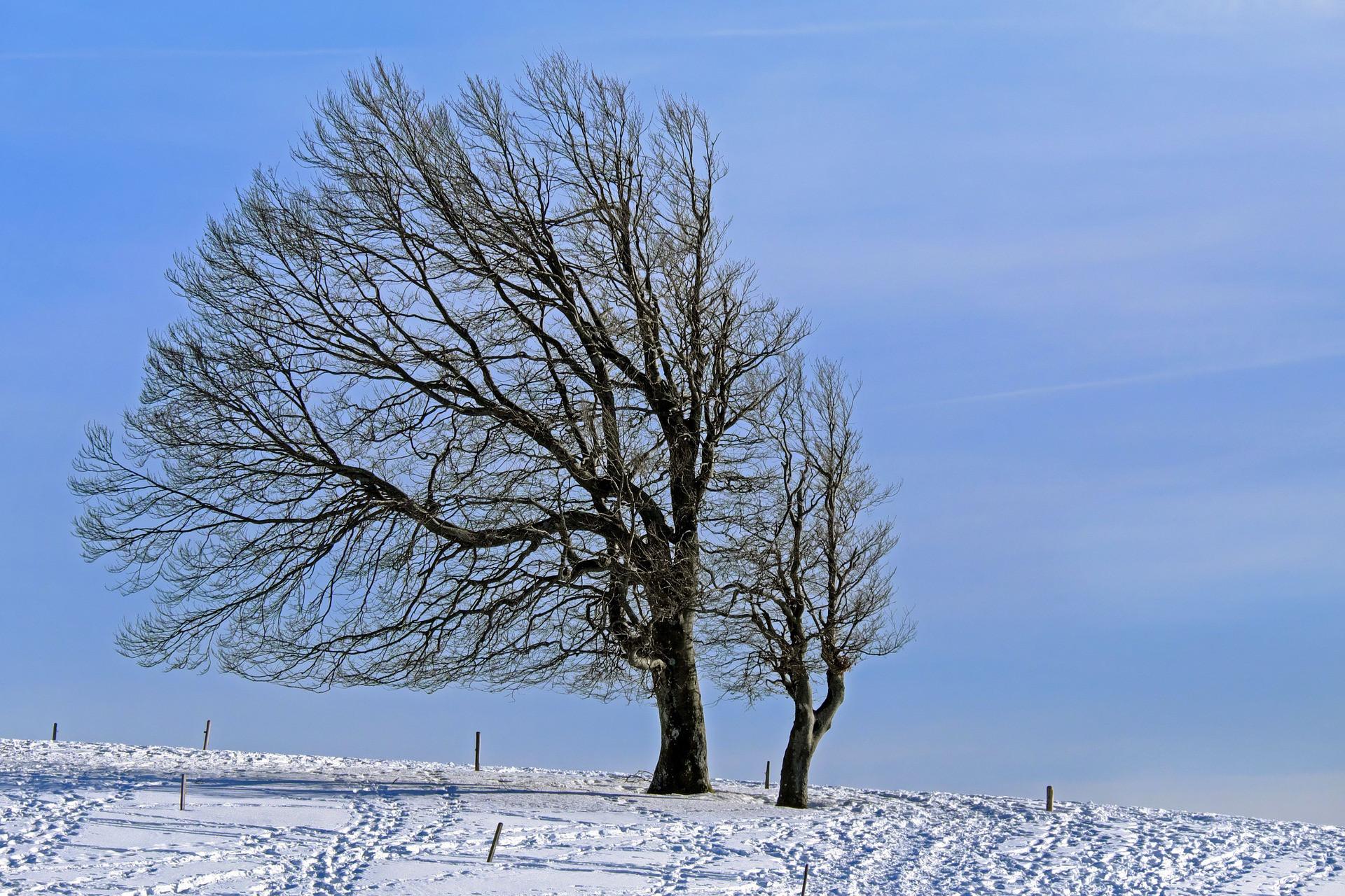 A Dunántúlon és a középső tájakon havaseső, havazás is várható az erős szél mellett