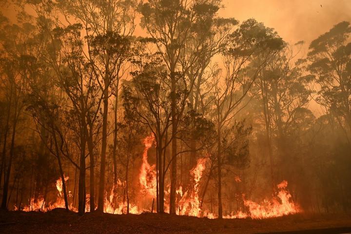 Székesfehérvár tízezer eurót ajánlott fel az ausztrál tüzek megfékezésére