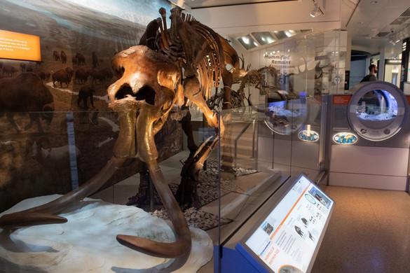 Visszatérhetnek a gyapjas mamutok?