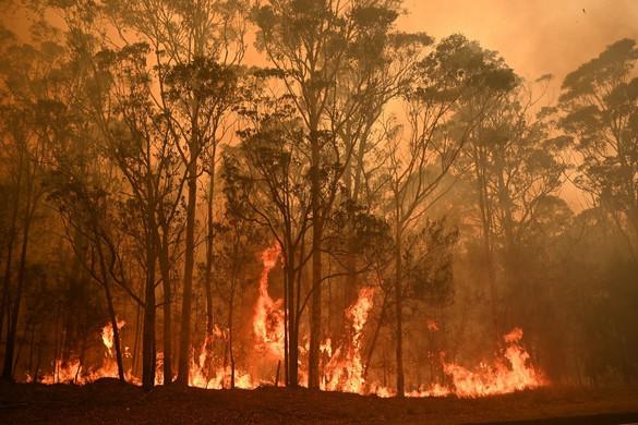 Szándékos gyújtogatók is felelősek lehetnek az ausztráliai tűzvészekért