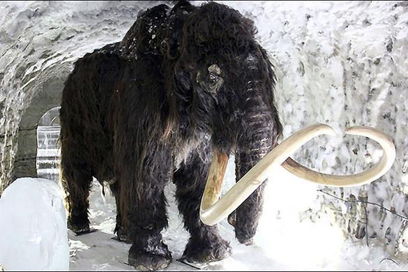 Megdönthetetlen bizonyítékot találtak arra, hogy emberek mészárolták le a mamutokat