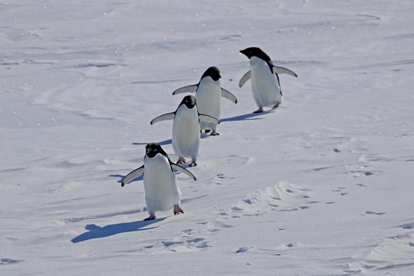 Rekord magas hőmérsékletet mértek Antarktiszon