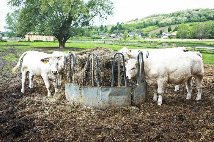 Növekedésben leköröztük az uniós gazdákat