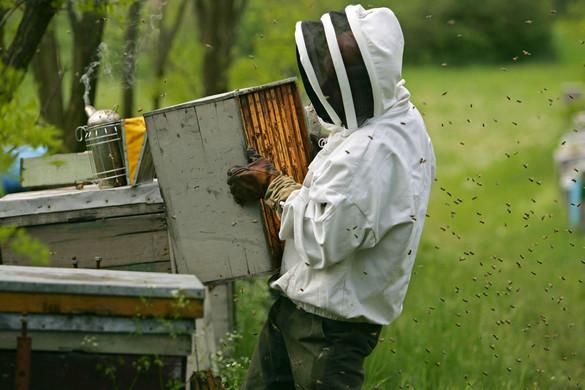 Méhészeteket tesz tönkre a jelenlegi európai politika
