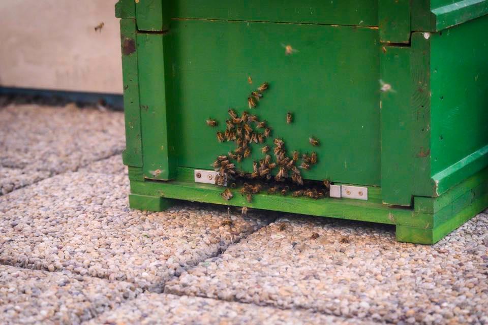 A méhek szerepére, a nagyvárosi környezet minőségére és a környezeti nevelés fontosságára kívánja felhívni a figyelmet Nagy István agrárminiszter