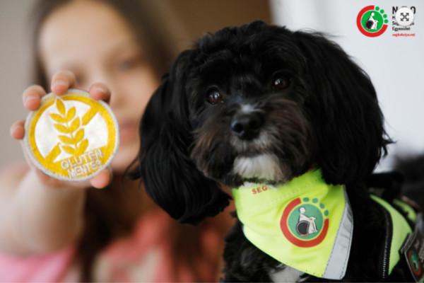 Szolgálatba állt Gofree, az első magyar gluténjelző kutya