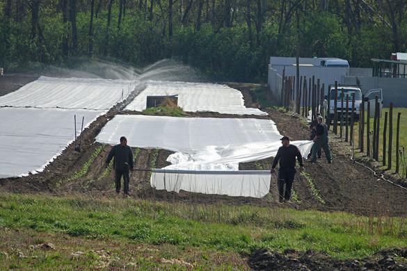 A kormány bizalmat szavaz a magyar gazdáknak