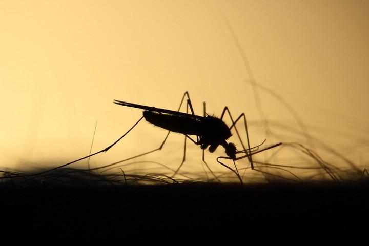 Készítsünk házi szúnyogcsapdát!