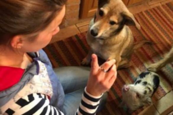 A malacok a kutyákhoz hasonlóan képesek kommunikálni az emberrel