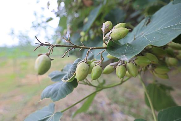 Smaragdzöld fákkal  a klímavédelemért