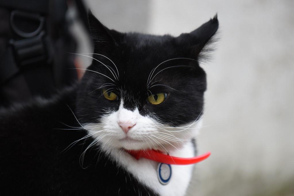 Palmerston a battersea-i állatmenhelyről került a külügyminisztériumba 2016 tavaszán