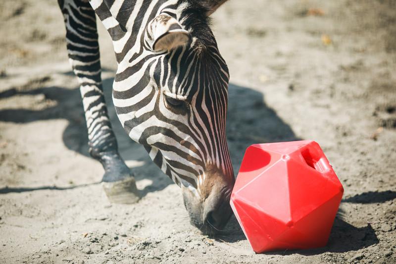 Az állatkert célja a kulturális örökség védelme és gazdagítása