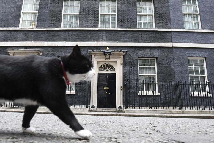 Visszavonul a brit külügyminisztérium macskája