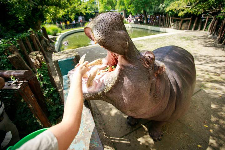 Fennállásának 154. évfordulóját ünnepli a Fővárosi Állat- és Növénykert