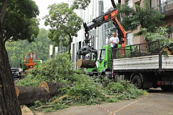 Zöldprogrammal győzött, most fákat vágat ki Soproni