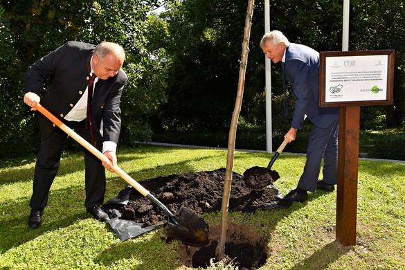 Minisztériumok közti együttműködés  a magyar erdőkért