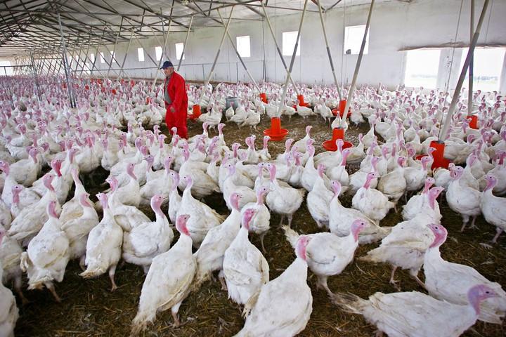 Harmadik legfontosabb exportcikké vált a baromfihús, deaz ágazat fejlődésének fenntartásához beruházások kellenek