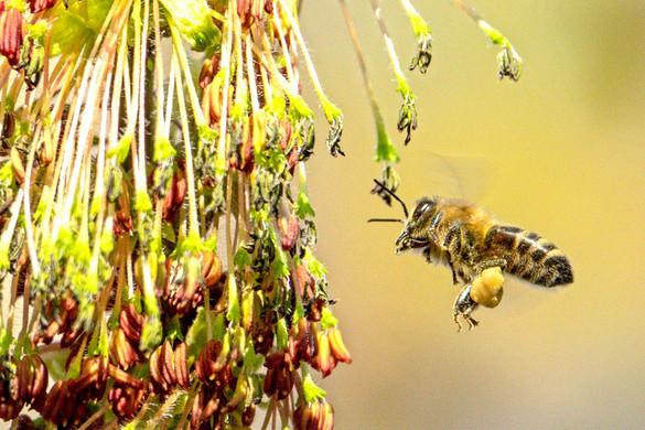 Hazai az összes itthon árult méz