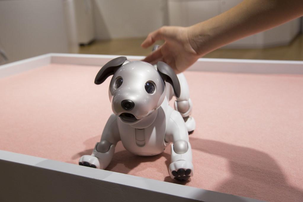 Az Aibo robotkutya észleli a mosolygást, a dicsérő szavakat, a hátát vagy fejét érintő simogatást is