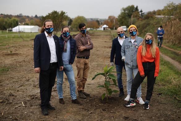 Fákat ültettek a 2022-es magyarországi kézilabda-Eb szervezői