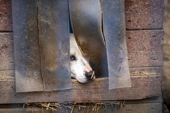Nyitrai: Közös ügyünk az állatvédelem