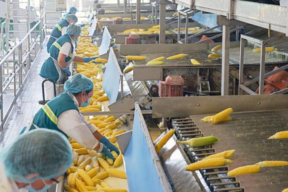 AM: 750 milliárd forintos támogatás az élelmiszeripar szereplőinek