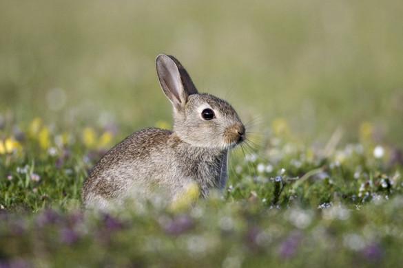 Senki ne ajándékozzon meggondolatlanul nyulat húsvétra