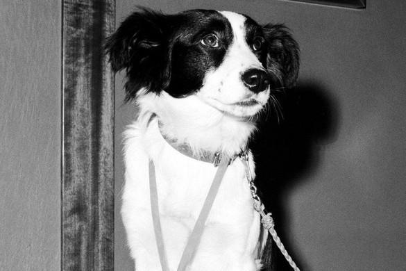 Így lett Anglia a hőse a kutya, aki megtalálta az ellopott vb-trófeát