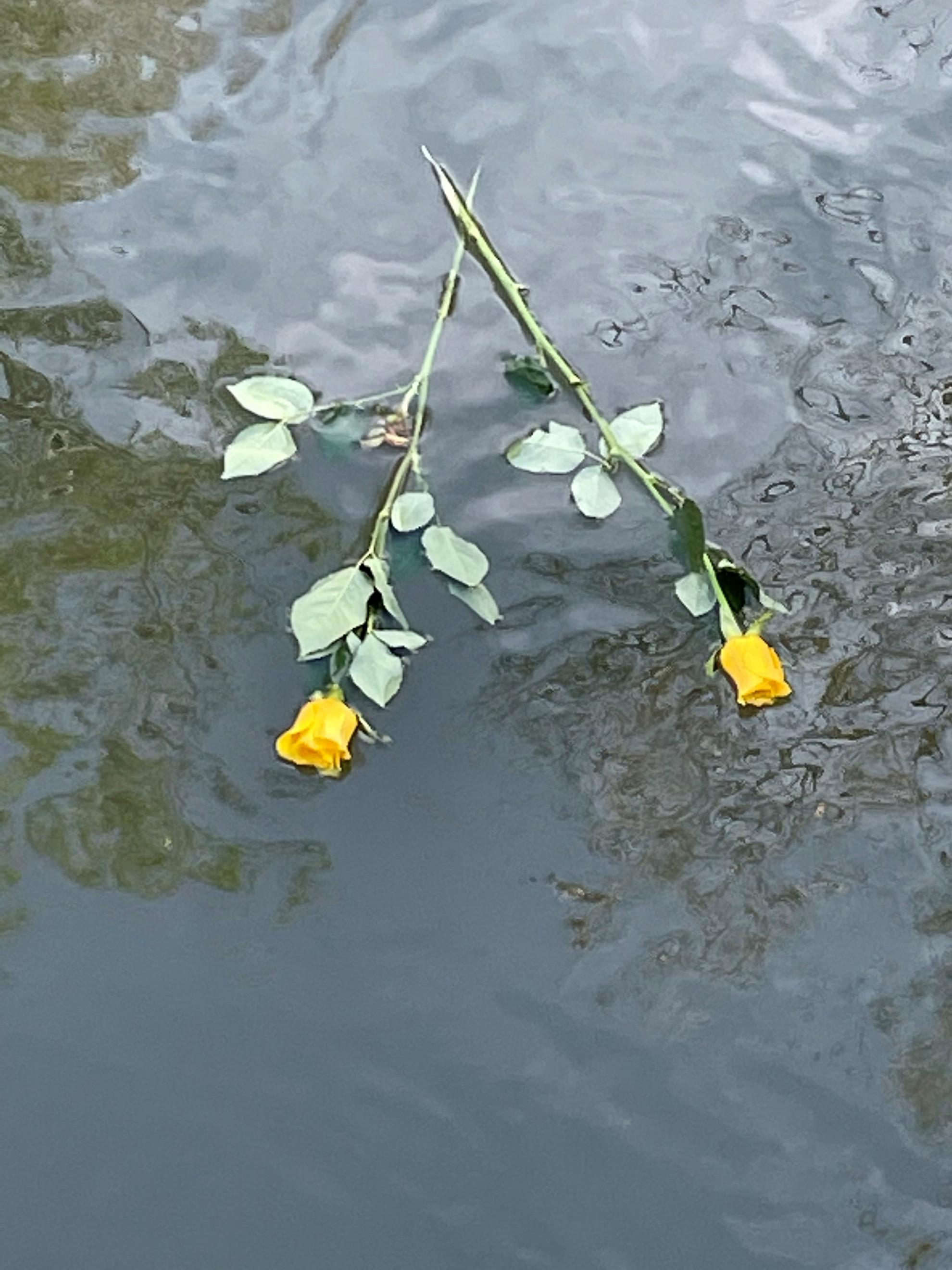 Két szál sárga rózsa a Tiszában, a színművésznő emlékére